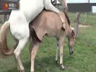 马的人工配种视频_【蔓萝视频】 驴马交配全集