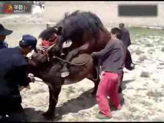 人与狗卡住图_狗配种被卡住了动物交配