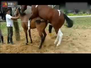 马和马交配