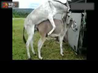 动物交配驴马交配-最新、最热、最八卦的娱乐
