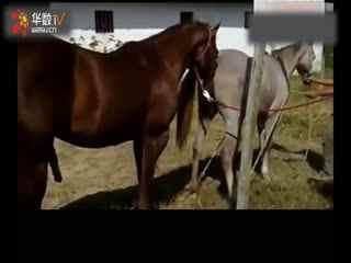 马驴交配繁殖