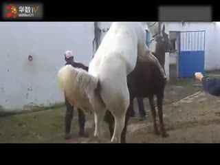 动物世界大洋马交配_动物世界性行为马交配繁殖实录