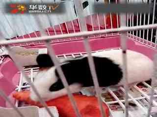 猪猪影院美女艺术片【荡妇q;2460859858】□ 华数t