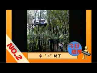 温州车挂树上_温州一越野车挂树上网友惊呼臣妾做不到
