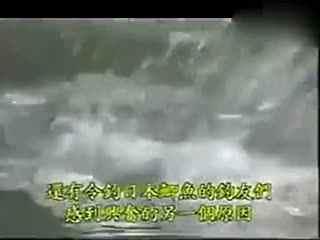夏季钓鱼水库华数钓鱼彩画教学视频--教程TV肉铅技术肉技巧图片