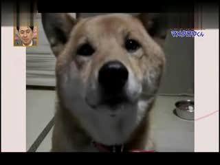 搞笑集锦 经典米奇老鼠动画--华数TV
