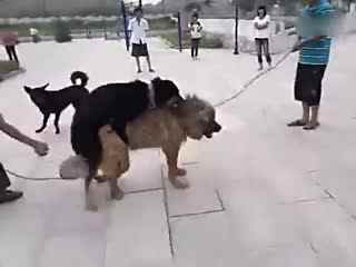 怎么挑选土狗幼犬