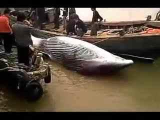 2014四海钓鱼视频 钓鱼比赛 渔民捕获巨型怪鱼