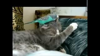 搞笑猫咪笑视频网上最火的萌视频--华数TV死人厨造图片