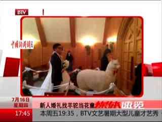 日本羊驼证婚服务 草泥马竟然还有这功能?