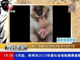 猴子讨食遭扔炮仗 画外音笑声不断图片