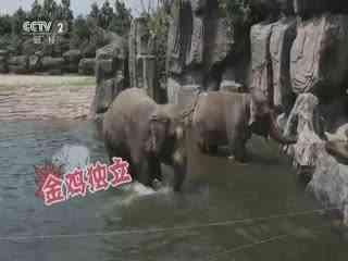 【是真的吗】大象用鼻子喝水?