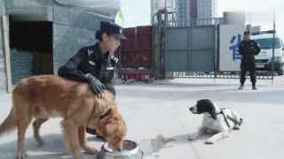 《警花与警犬》第29集预告