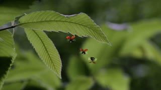 昆虫总动员第二季  第1集