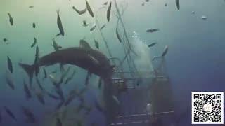 奇闻趣事 一言不合!大白鲨很生气向潜水员排便