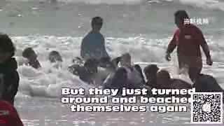 海边游客疯狂跳进大海 男子看清后被彻底震撼了