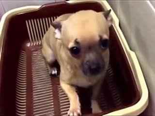 狗狗视频大全搞笑_宠物搞笑视频 狗狗视频大全搞笑--华数TV