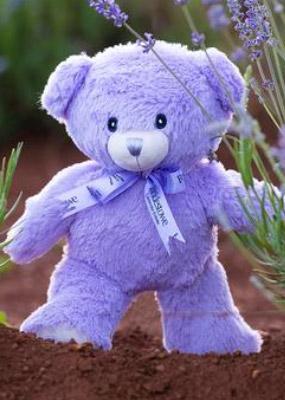 薰衣草小熊