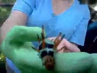 实拍世界上最大的毛毛虫