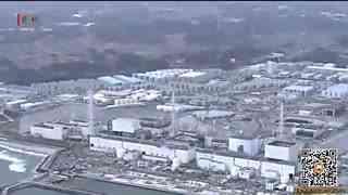 """日本福岛核灾区现手掌大""""巨型生蚝"""""""