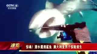 实拍潜水员遭鲨鱼袭击_鱼叉插嘴刺死惊险逃生