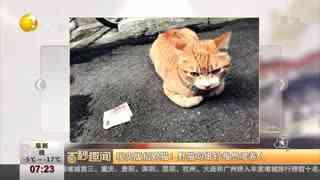 现实版招财猫!野猫叼纸钞报恩喂养人