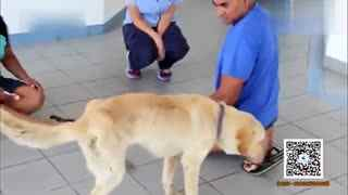 爱犬走失9个月后终于重逢 皮包骨头看得见肋骨
