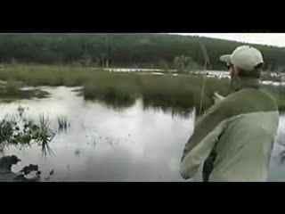 野钓鲤鱼视频讲解 钓鲤鱼--华数TV