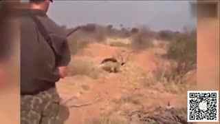 命悬一线!狩猎队途中突遇猛狮 齐开枪化险为夷