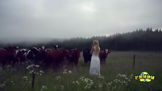 这歌声有魔性 牛听了竟然会发情!