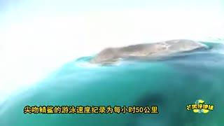 澳捕鱼者抓拍鲨鱼 贴船身腾空而起惊险画面