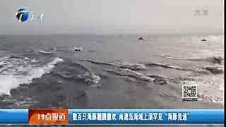 """实拍:南澳岛海域上演罕见""""海豚竞速"""""""