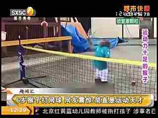 6岁猴子打网球 网友震惊:简直是运动天才