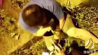 司机为躲酒驾拔草狂吃 一片草被吃光警察拦不住