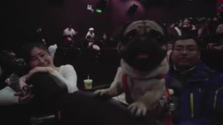 宠有料 200条狗狗一起进电影院,观看 一条狗的使命 活动花絮