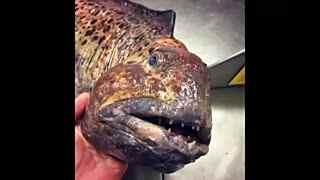 探险家揭秘最奇异鱼类真容