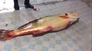 渔民捕到天价鱼 卖出347万