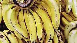 女子吃香蕉遇剧毒蜘蛛险丧命