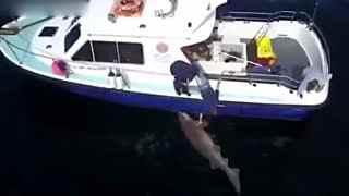 渔民捕获680公斤重巨鲨