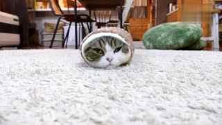 【萌宠】可爱猫咪喜欢钻洞 这时意外发生了