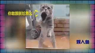 娱人鱼_20170609_桃花依旧笑春风!