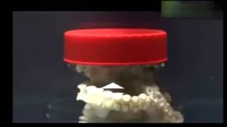 男子将章鱼关在封闭的玻璃罐里,之后发生了想象不到的画面