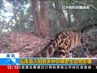 云南首次拍到多种珍稀野生动物影像