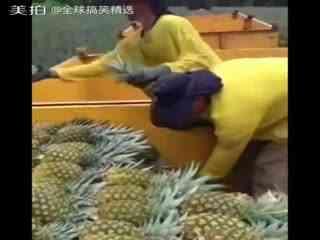 全球搞笑精选 一伙工作人员们摘菠萝,传菠萝,装菠萝的系列工作...