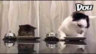 全球搞笑精选 猫:铲屎的这个量也太少了吧!还得一个劲儿的按铃!喂!左边的你能按自己的铃吗