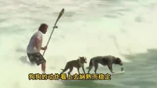 主人带两只狗狗大海冲浪 这杂技我给满分
