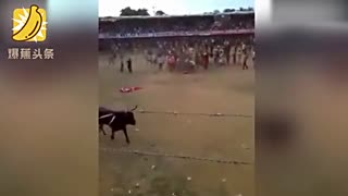 男子斗牛欲耍帅 空翻从牛身上跃过失败反被顶翻