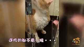 主人帮猫咪洗澡 它50秒后居然骂人了