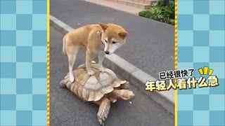 【萌星人de那些破事】呆萌宠物的尴尬瞬间!