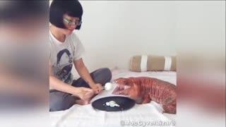华裔女孩养蜥蜴当宠物  又胖又萌成网红